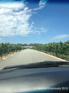 Arriving at Olive Farm Wines and Cheese Barrel - wonderful driveway!
